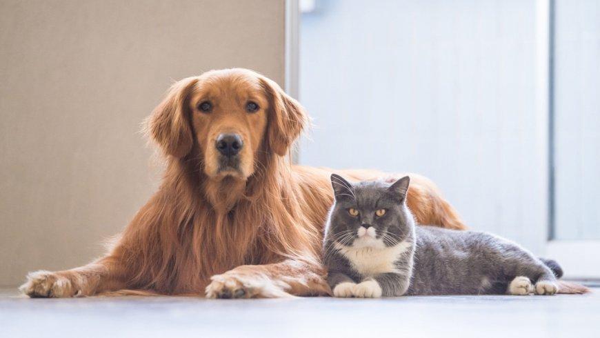 Uveítis: la extraña enfermedad que puede ser causada por parásitos de mascotas